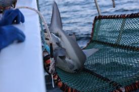 Photo: Matt Ellis/NOAA Fisheries