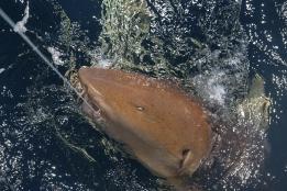 Photo: Matt Ellis/NOAA