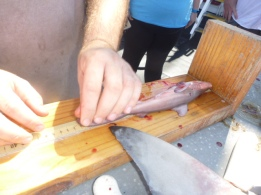 Adam Pollack, Fisheries Research Biologist, measures the pup's length in millimeters.