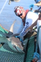 Trey quickly readies the shark for data collecting, tagging, and release.