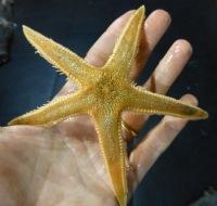 Deep seastar