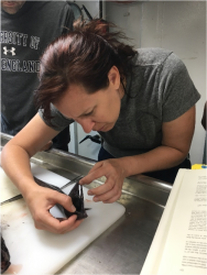 Examining a cutthroat eel