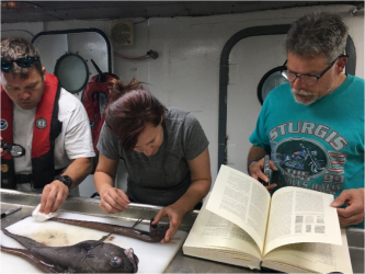The scientists work together and reference books to identify specimens.