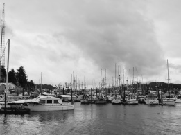 The local harbour