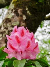 Park flower