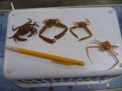 Various crabs