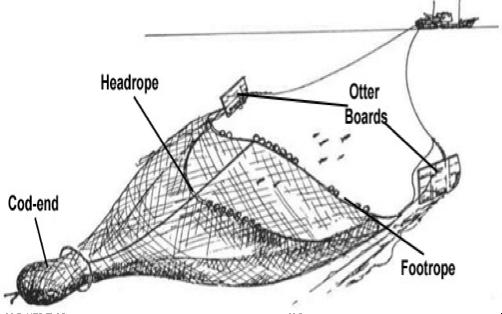 Trawl-Diagram