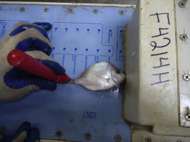 1 - MB Measure Fish