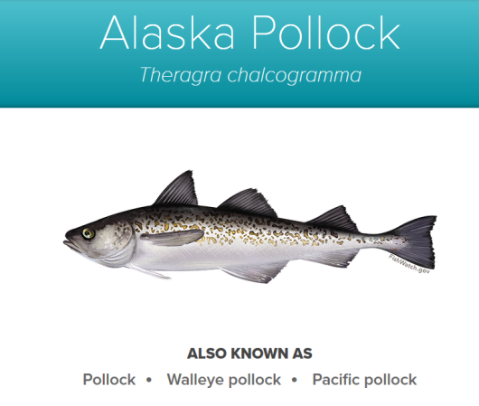 Alaska_Pollock_-_source_NOAA_fishwatch.gov