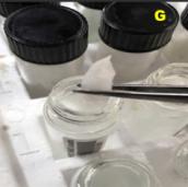 Figure G. Storing otolith in vial
