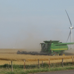 wind and wheat