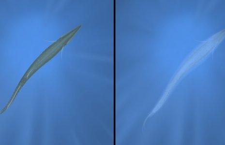 counterillumination 2
