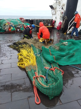 Crew picking through the net