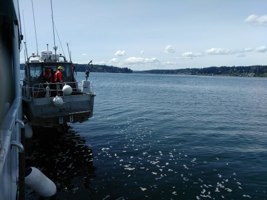One of the Launches Being Lowered into Puget Sound