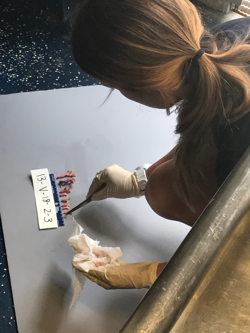 LT Drummond preps samples