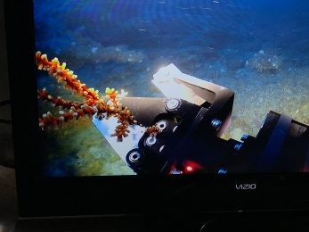 ROV collects coral