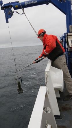 Grabbing the Fish