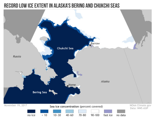 This NOAA image from November shows the historically low ice in the study area this fall. Historically the Chukchi Sea has had sea ice at this time. This map is a good guide to orient you to the study area from Nome to the north-northwest of Barrow Alaska.