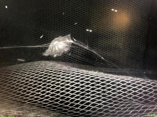 Cam Trawl Jellyfish