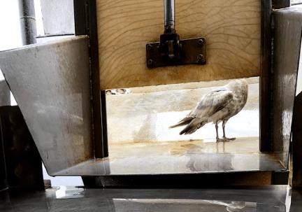 Bird on the fish table