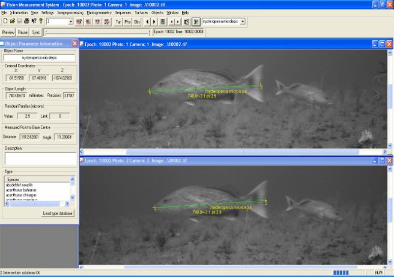 Stereoscopic images captured from the video array allow for digital measurements of fish lengths