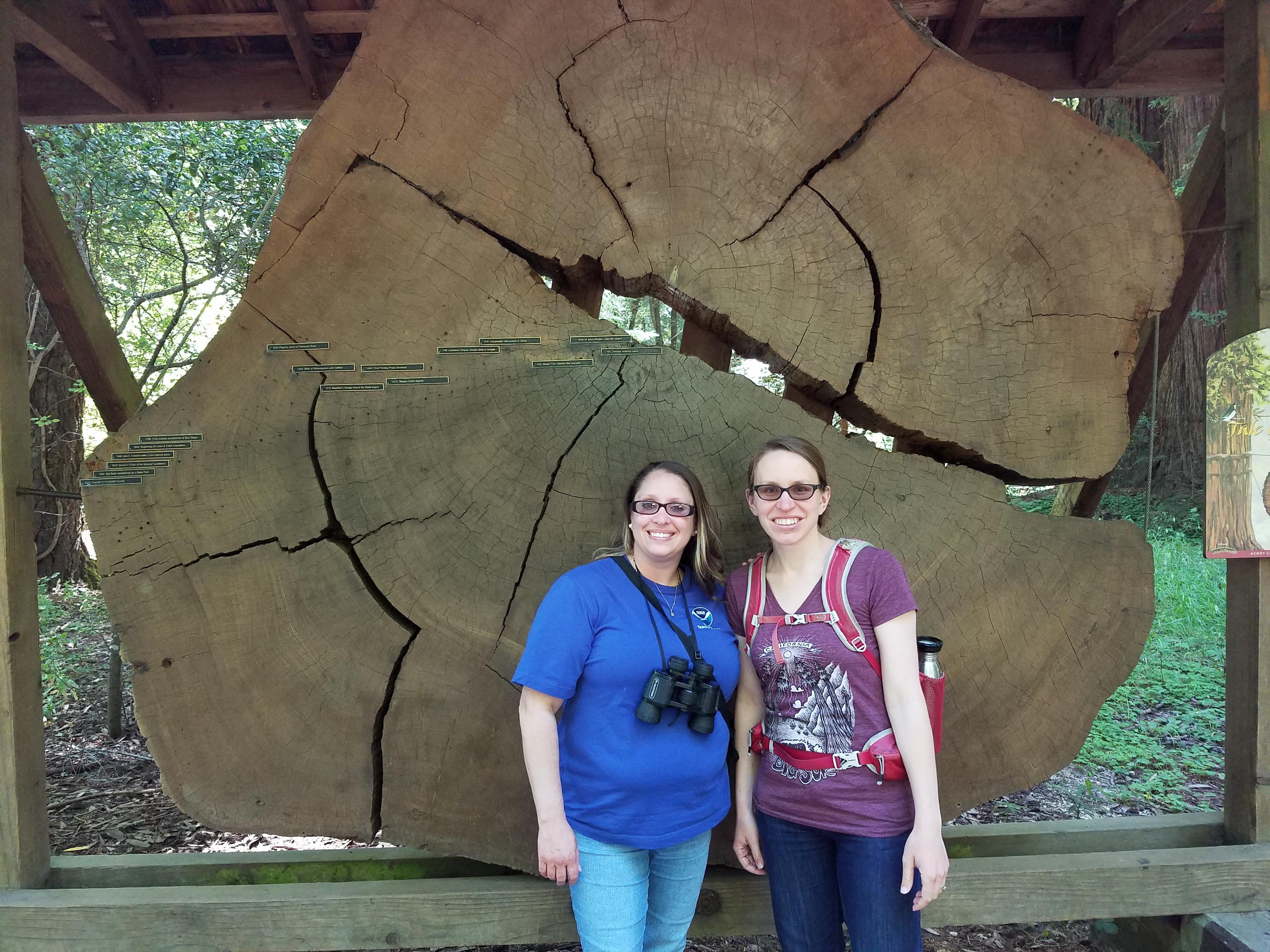 Redwood Tree cookie