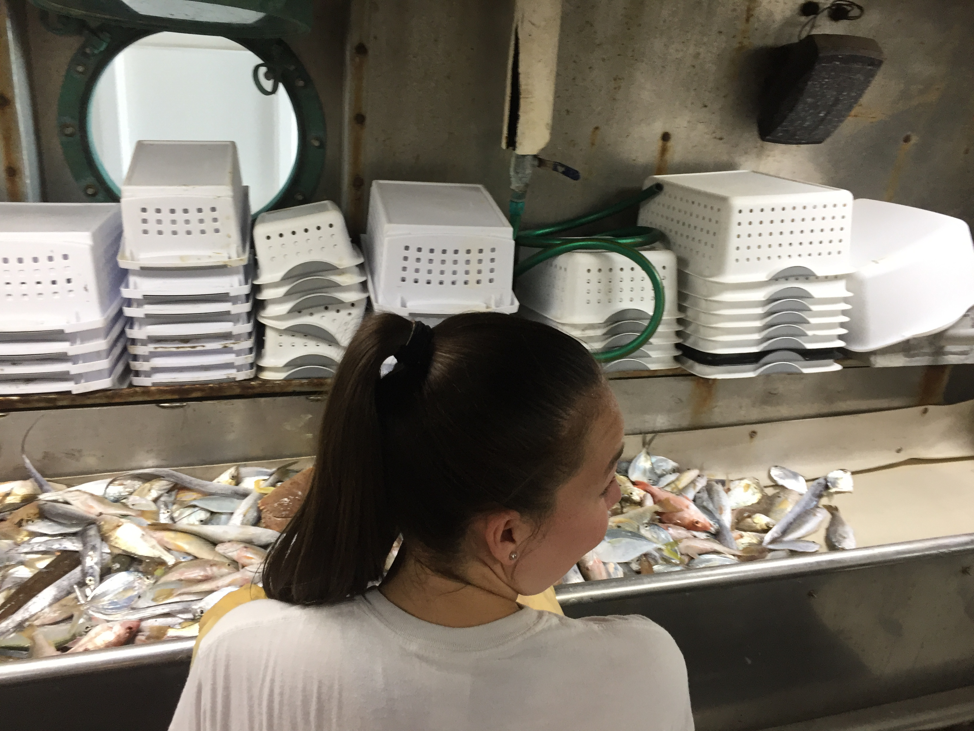 Emily McMullen sorting fish