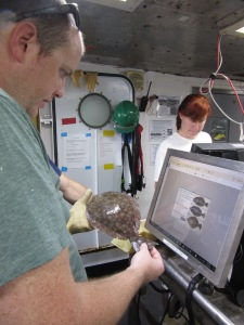 """Flatfish"" is not descriptive enough. Andy Millett checks the keys on a computer loaded with identification keys."