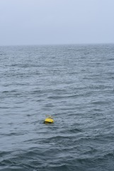 Tide Buoy near Cape Lisburne, AK