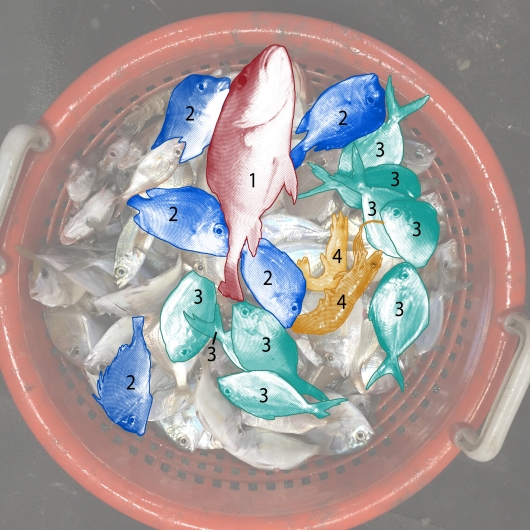 Basket of fish revision