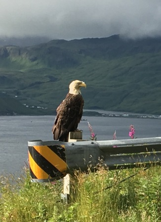 One of the many eagles in Dutch Harbor