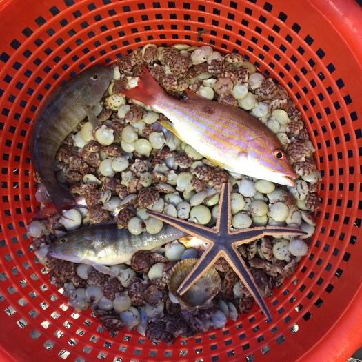 Basket of catch