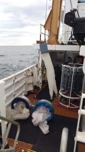 bongos on deck