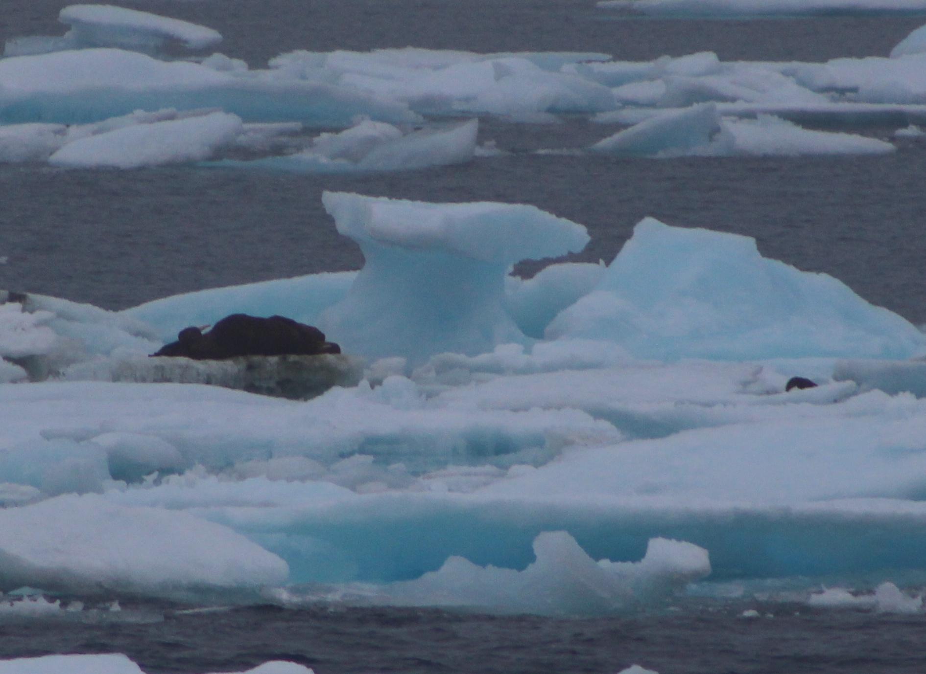 Walrus Ice Umbrella