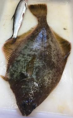 Yellowfin Sole