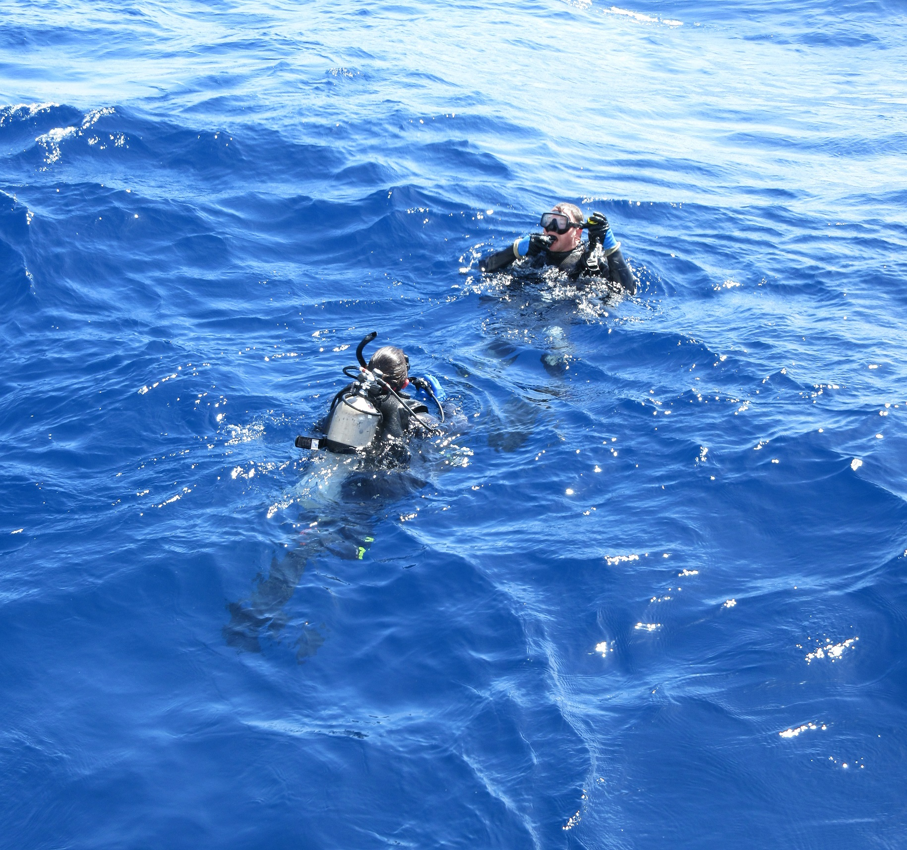Divers at the surface of the water, preparing to dive.
