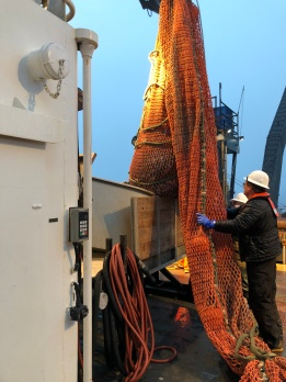 Our survey tech prepares to drop the catch in to the hopper for analyzing