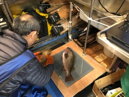Dr. Dezhang Chu x-raying a rockfish