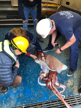 Scientists analyzing the Big Squid