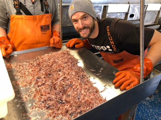 Another pile of krill (the hake eat these)
