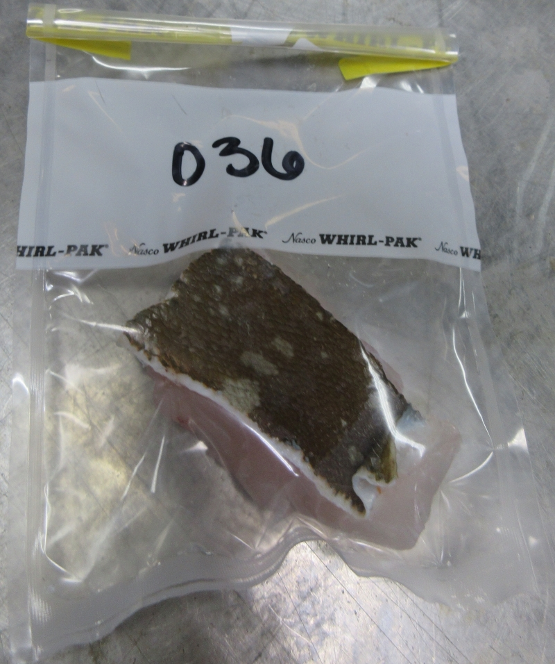 A fish tissue sample inside a plastic bag.