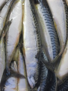 A pile of frozen mackerel used as bait.