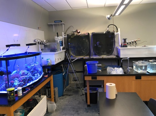View of the lab showing multiple tanks and accompanying equipment