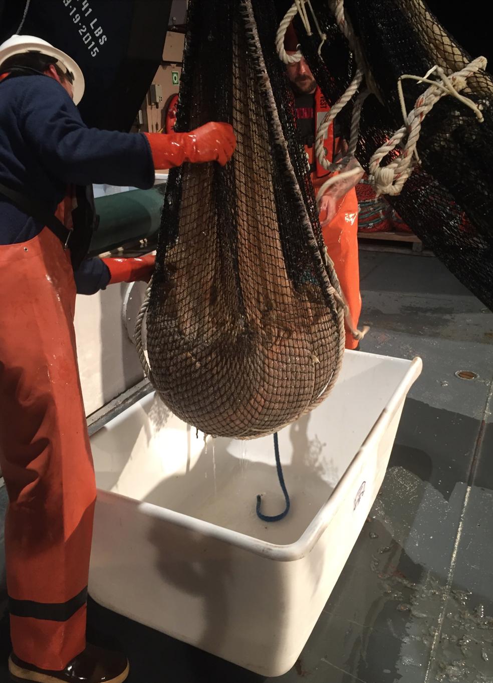 Cobb Trawl net