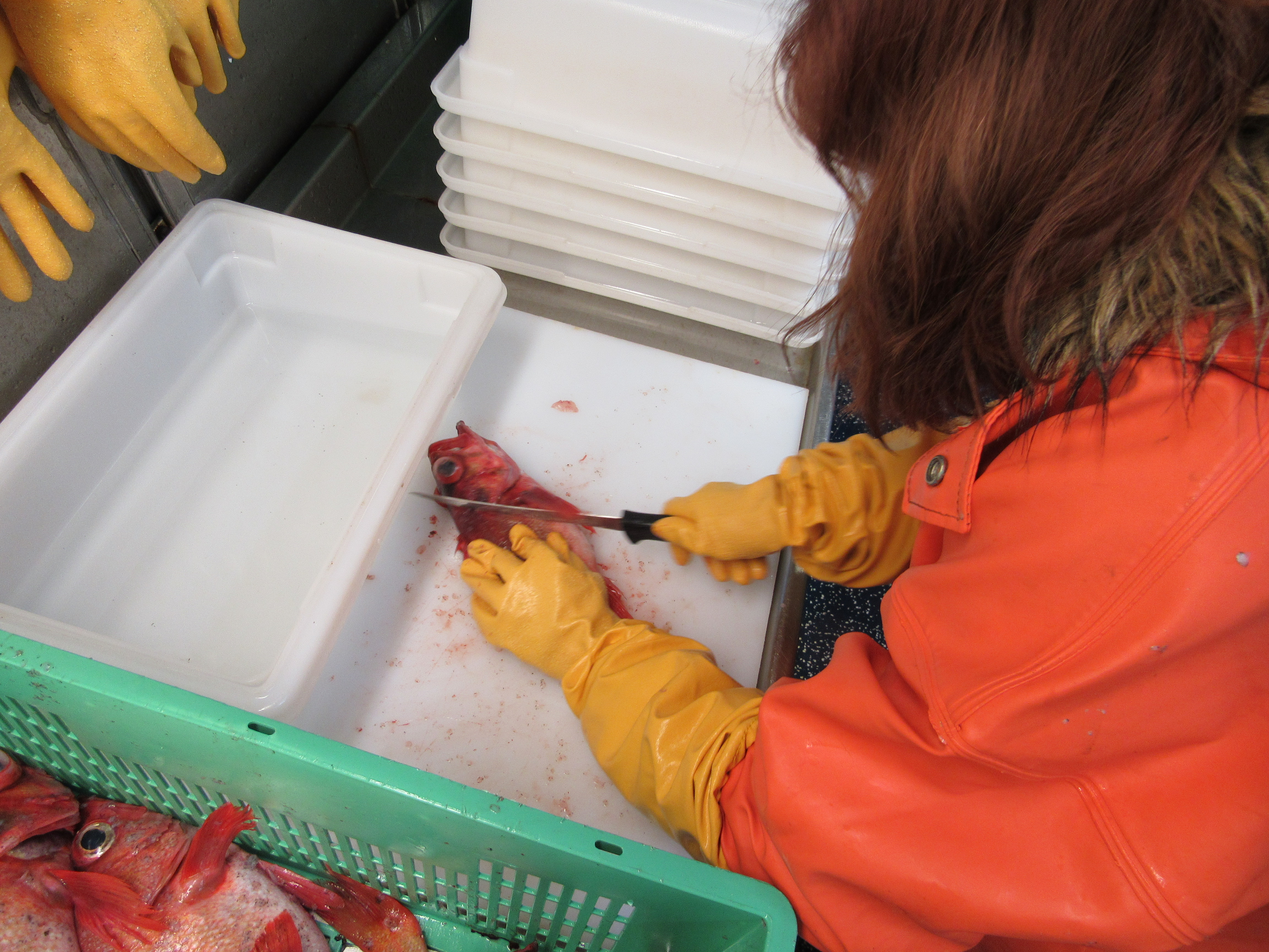Erica fillets a rockfish