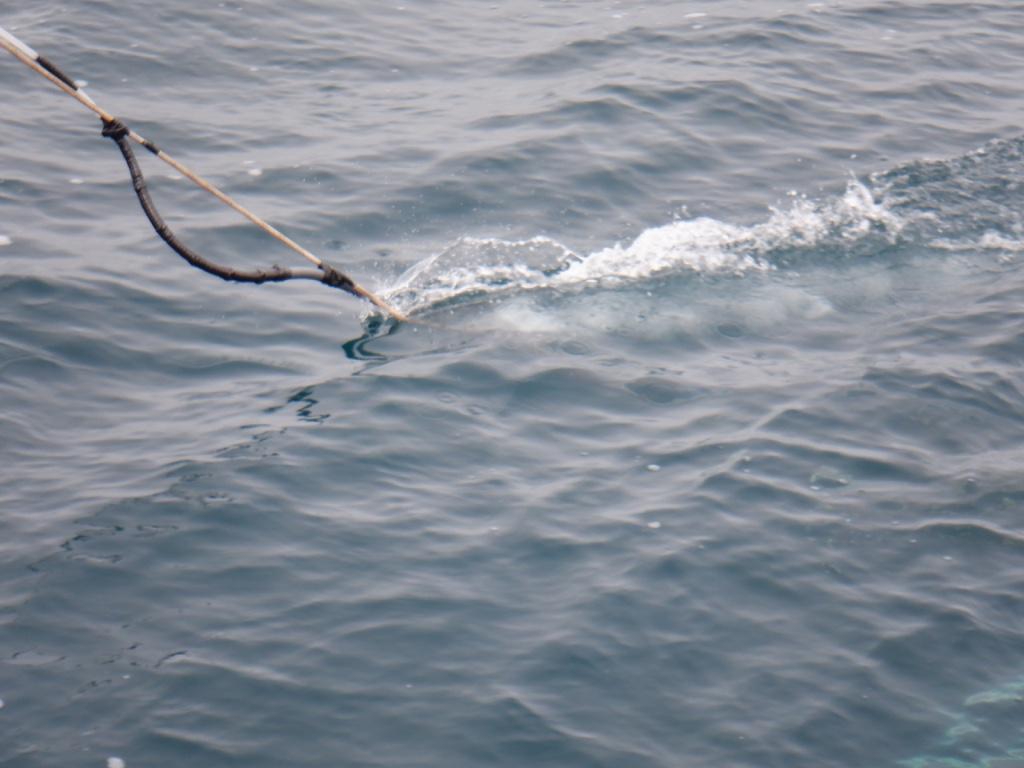 iron fish in water