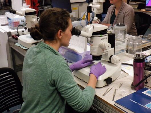 Gwenn with microscope