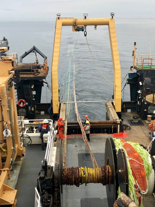hauling in the trawl net