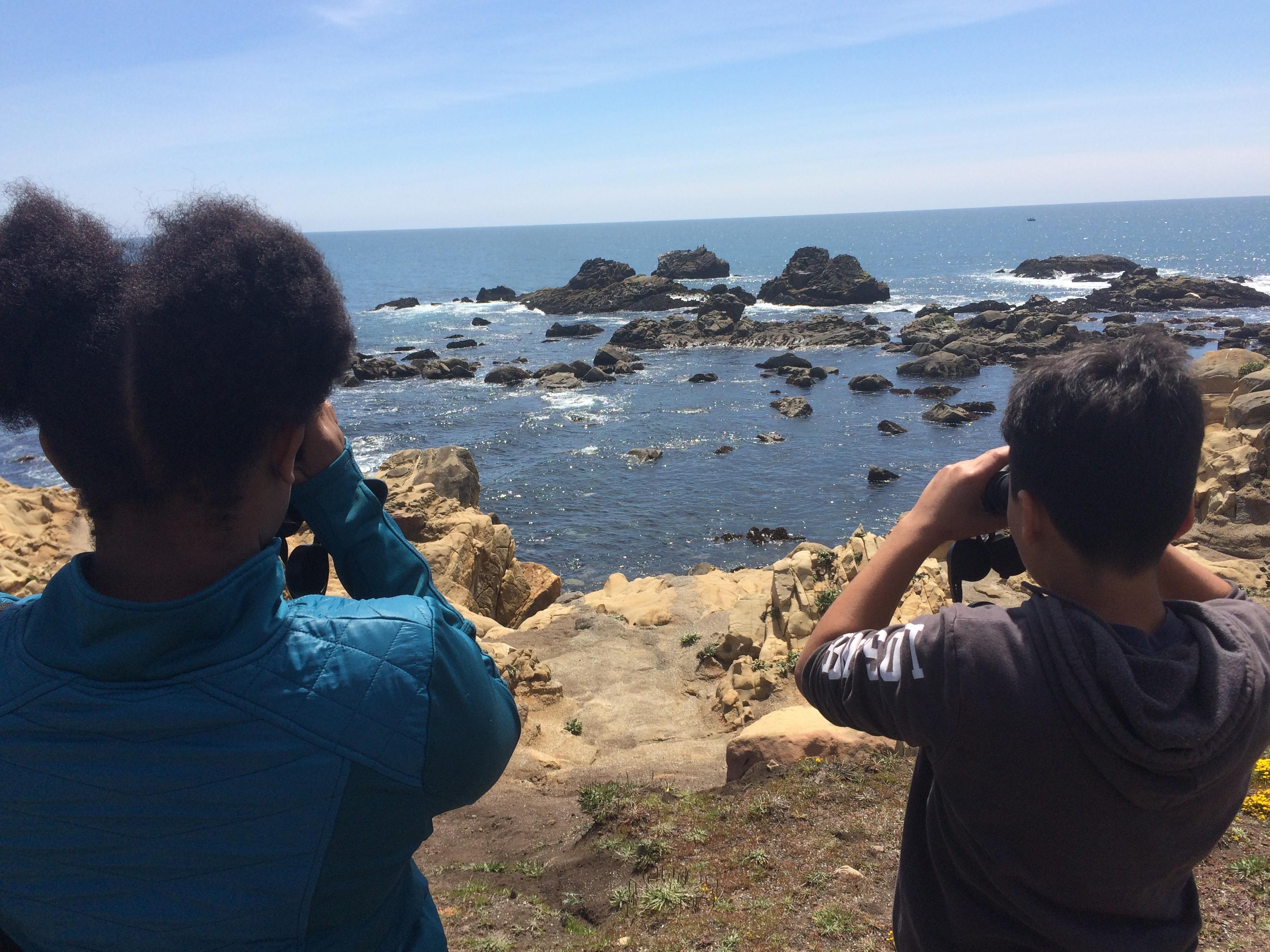 Students observe seals