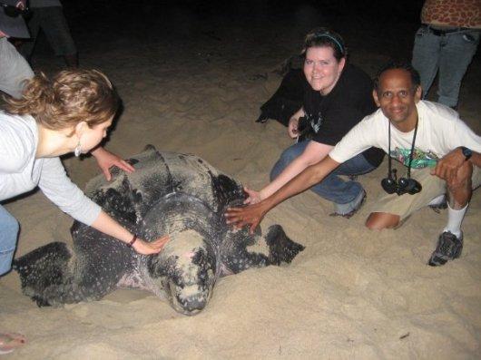 Kannan and sea turtle
